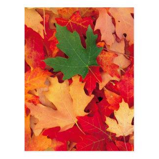 otoño (15) tarjeta postal