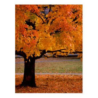 otoño (1) tarjetas postales