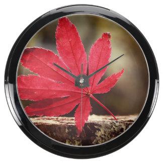 Otoño Reloj Aquavista