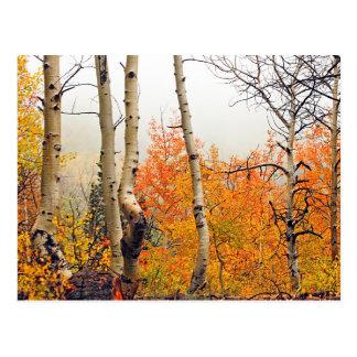 Otoño brumoso Aspen Tarjetas Postales