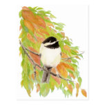 Otoño, caída, Chickadee, naturaleza del pájaro Tarjetas Postales