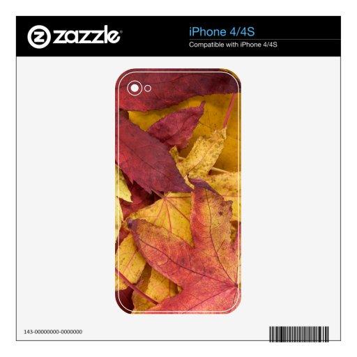 otoño con amor. calcomanías para el iPhone 4S