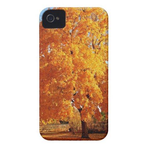 Otoño de la realidad del árbol Case-Mate iPhone 4 coberturas