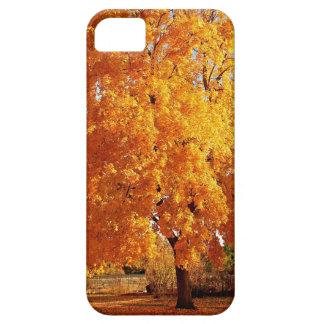 Otoño de la realidad del árbol iPhone 5 carcasa