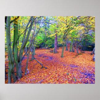 otoño del arbolado póster