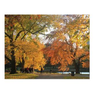 Otoño del jardín público de Boston Tarjetas Postales