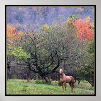 Otoño en la huerta del caballo póster