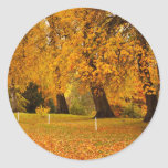 Otoño en parque etiqueta redonda