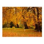 Otoño en parque tarjeta postal