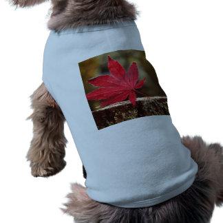 Otoño Camisetas Mascota