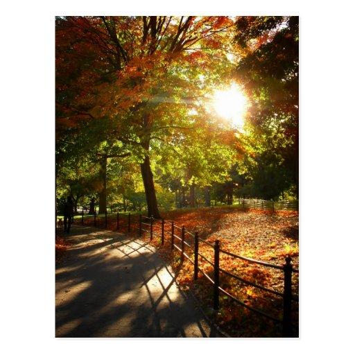 Otoño Sun en Central Park, New York City Postal