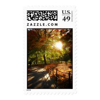 Otoño Sun en Central Park, New York City Envio