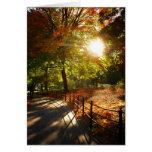 Otoño Sun en Central Park, New York City Felicitacion