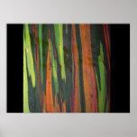 Otro eucalipto del arco iris poster
