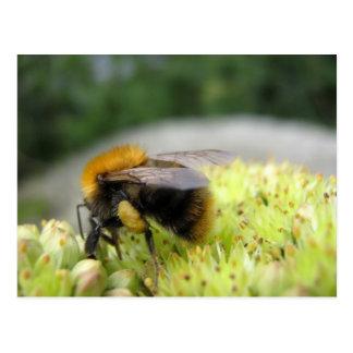 Otro más manosee la abeja postales