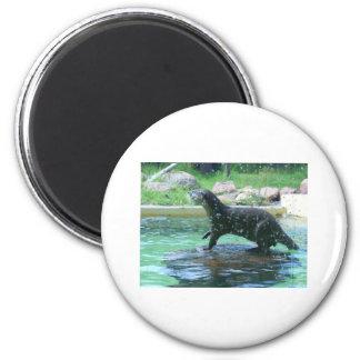 Otter 2 Inch Round Magnet
