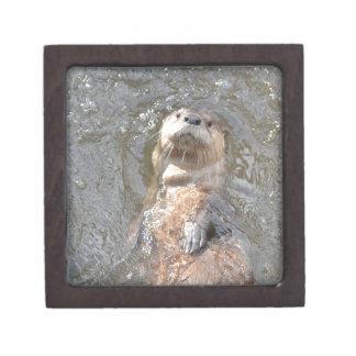Otter Back Float Gift Box