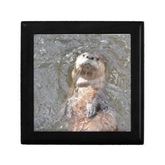 Otter Back Float Keepsake Box
