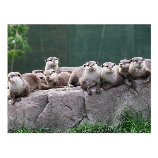 Otter family postcard
