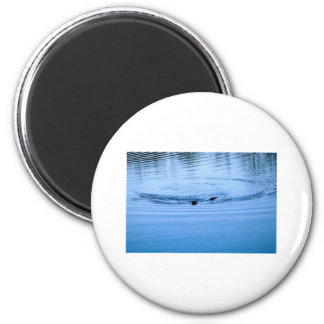 Otter in Lake Quinalt WA Photo Art Nature Curious 2 Inch Round Magnet