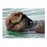 otter in prayer postcard