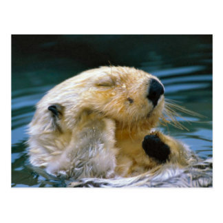 Otter in the pool postcard