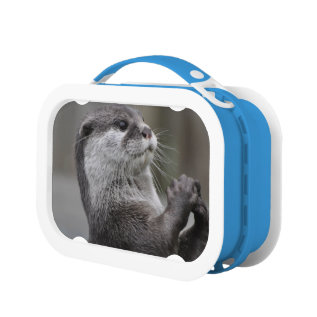 Otter Lunch Box at Zazzle