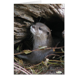 Otter-ly Delightful Card