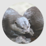 Otter Pair Stickers