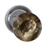 Otter Pinback Button