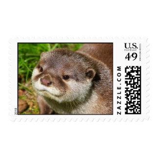 Otter Portrait Stamp