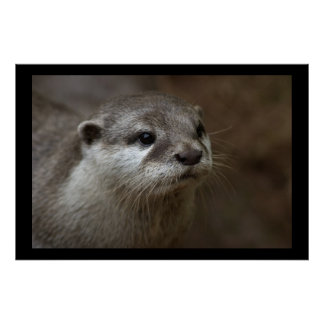 Otter Posters