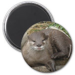 Otter Resting Magnet Magnets