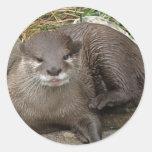 Otter Resting Sticker