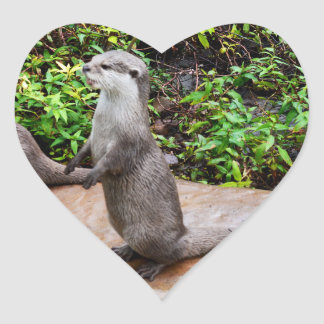 Otter Standing Waiting For Food, Heart Stickers. Heart Sticker