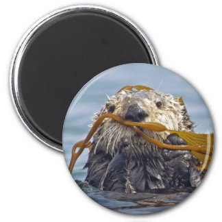 Otter Wrapped in Kelp.Magnet 2 Inch Round Magnet