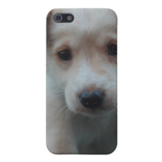 Otterbox for puppy covers for iPhone 5