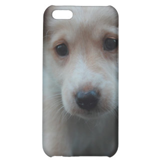 Otterbox for puppy iPhone 5C cases
