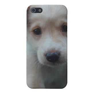 Otterbox para el perrito iPhone 5 cárcasas