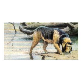 otterhound card