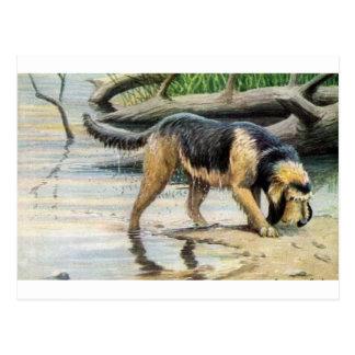 otterhound postcard