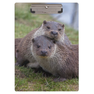 Otterly in Love Clipboard
