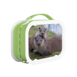 Otterly in Love Lunchbox