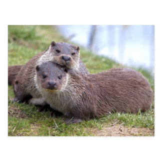 Otterly in Love Postcard