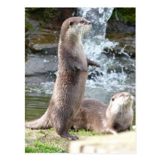 Otters enjoying the sun postcard