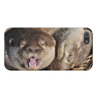 Otters Case For iPhone 5
