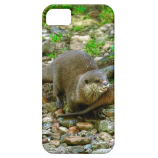 Otters making their way to the water iPhone SE/5/5s case