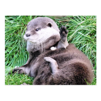 OTTERS POST CARDS