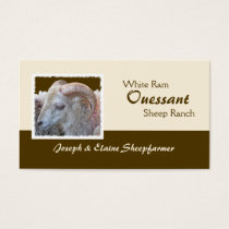 Ouessant Sheep business card