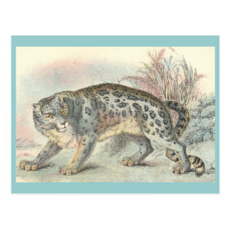 Ounce (Snow Leopard) Post Cards